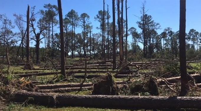 Islam Mengajarkan Larangan Merusak Hutan